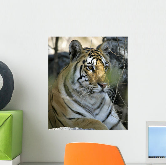 Tiger Sitting Amongst Leaves, Close Up Wall Mural
