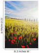 Poppies In Wheat Field At Dawn Wall Mural
