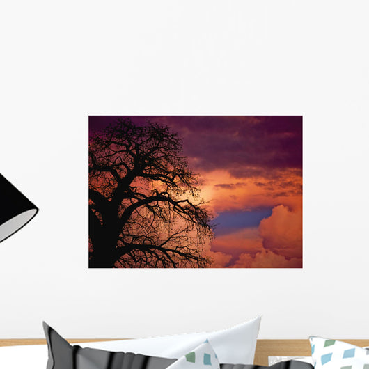 Silhouette Of Baobab Tree At Dusk Wall Mural
