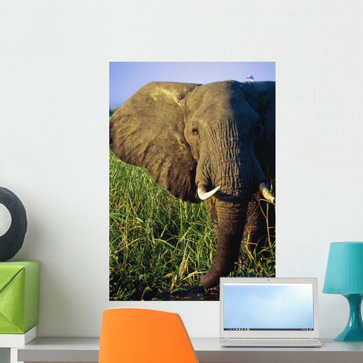 Elephant Eating Reeds On Riverbank Wall Mural