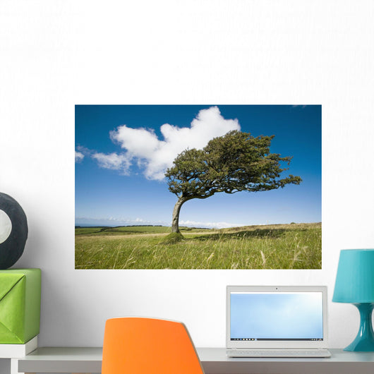 Wind-Swept Solitary Tree On Open Grassy Moorland Wall Mural