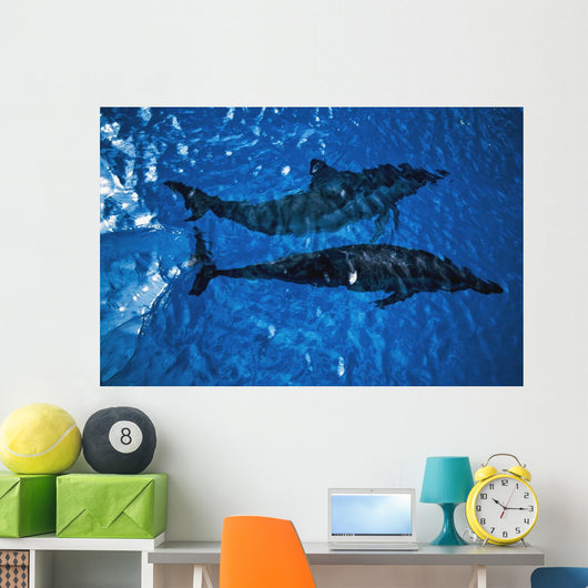 Two Spinner Dolphins In Ocean Wall Mural