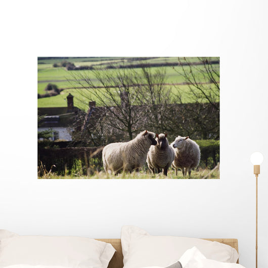 Three Sheep In A Field With Stone Houses And Pastures Wall Mural