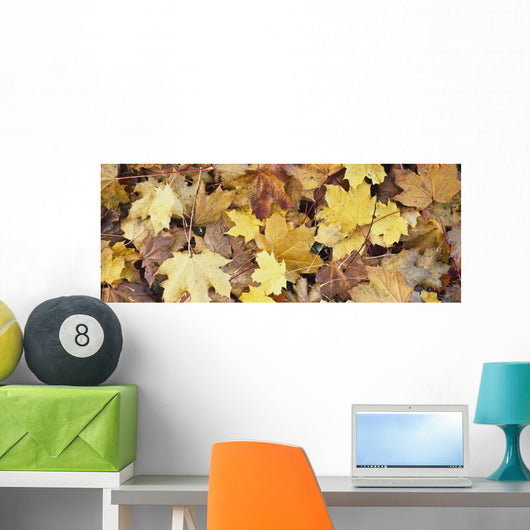 Golden Autumn Leaves On Ground Wall Mural