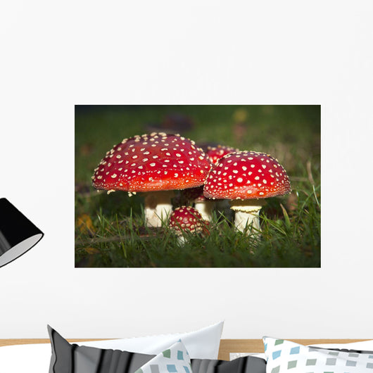 Fly Agaric Mushrooms Growing In The Grass Wall Mural