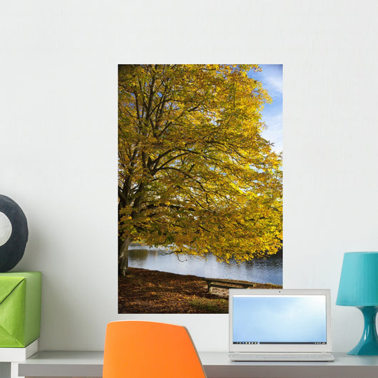 A Tree With Golden Leaves And A Park Bench On The Edge Of The Water Wall Mural