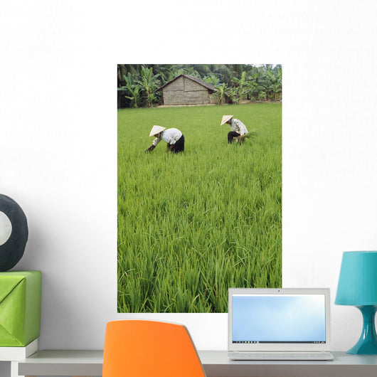 Two Farmers In Rice Paddy Wall Mural