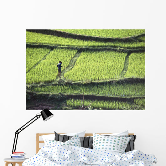 Farmer In Rice Paddy, Elevated View Wall Mural