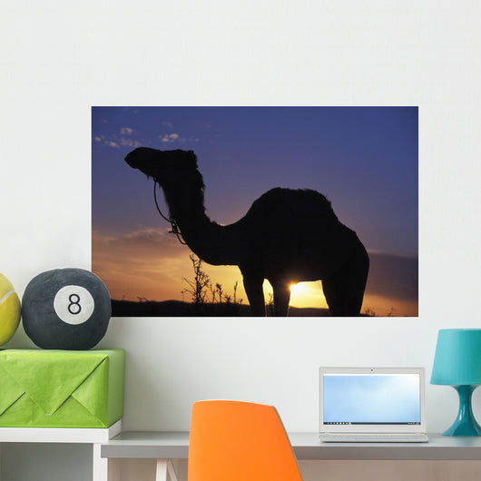 Silhouetted Camel At Sunset Wall Mural