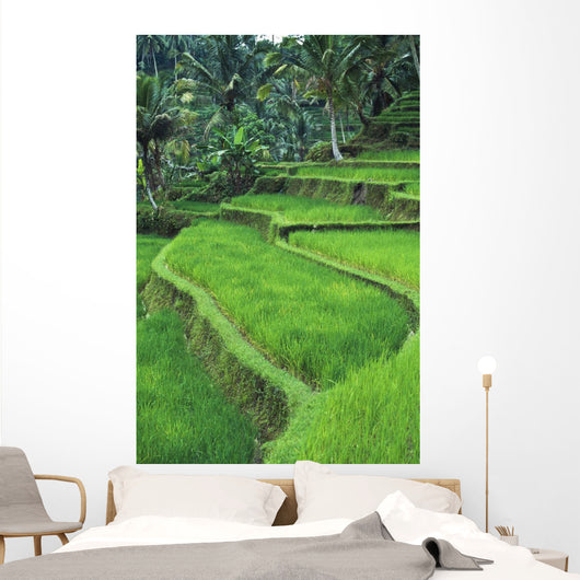 Terraced Fields Of Rice Wall Mural