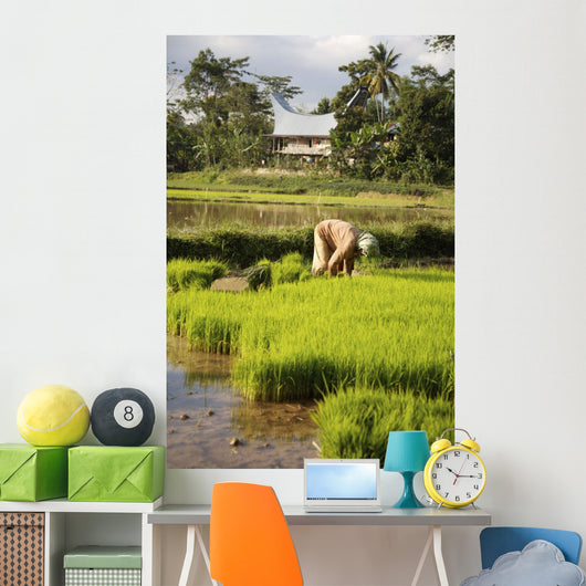 Woman Planting Rice Wall Mural