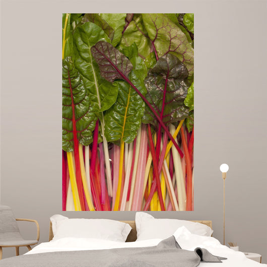 Colorful Rainbow Swiss Chard Wall Mural