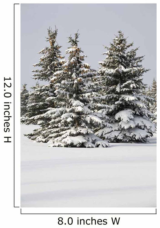 Snow Covered Evergreen Trees Wall Mural