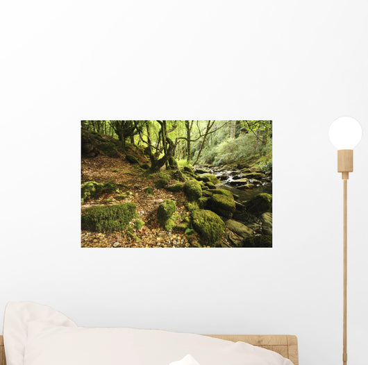 Owengarriff River In Killarney National Park In Munster Region Wall Mural