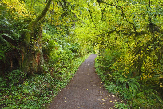 A Trail In Silver Falls State Park Wall Mural