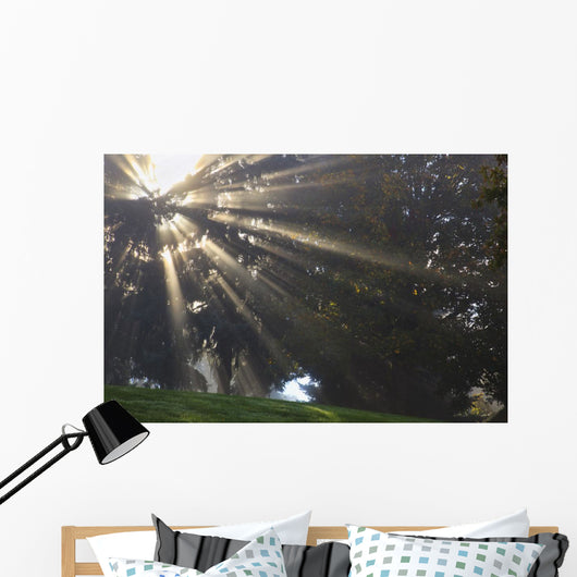Rays Of Sunlight Through The Trees And Morning Fog Wall Mural