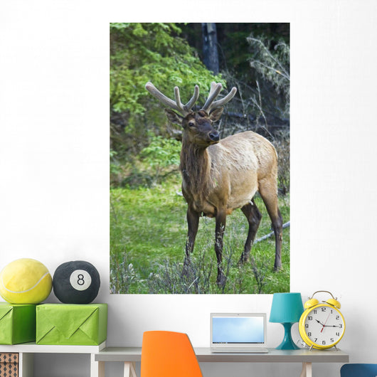 Roe Deer In Forest, Canadian Rockies,Canada Wall Mural