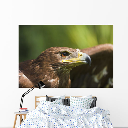 The Head Of An Eagle Wall Mural