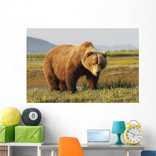 A Brown Grizzly Bear Wall Mural