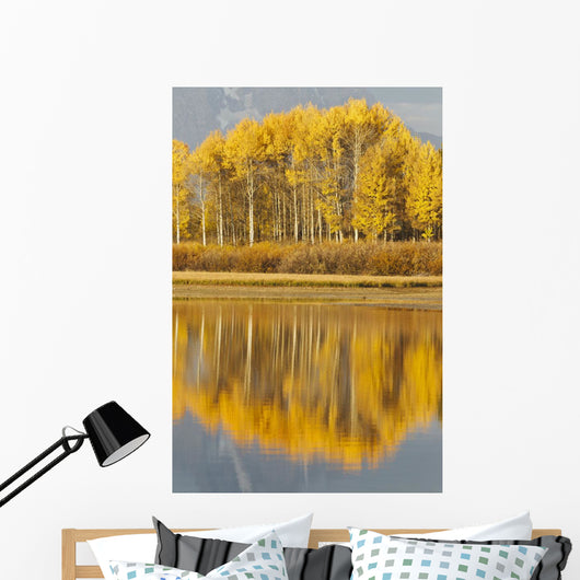 Aspens Reflected In A Pool In The Snake River In Autumn Wall Mural