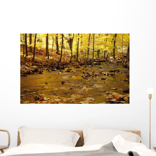 Stream In Autumn Wall Mural
