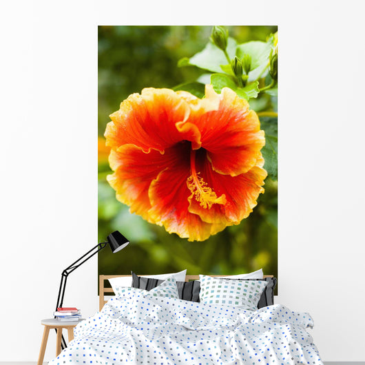 Brightly Colored Hibiscus Flowers Wall Mural