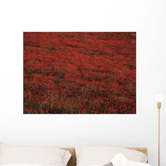 Field Of Red Poppies Wall Mural