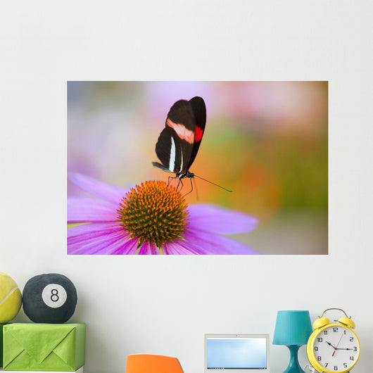 Colorful Butterfly On Cone Flower Blossom In Spring Wall Mural