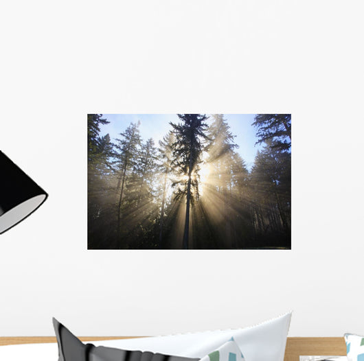 Sun Shining Through Morning Fog And Trees Wall Mural