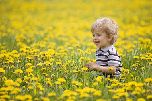 18-Month-Old Boy In Dandelion Field Wall Mural