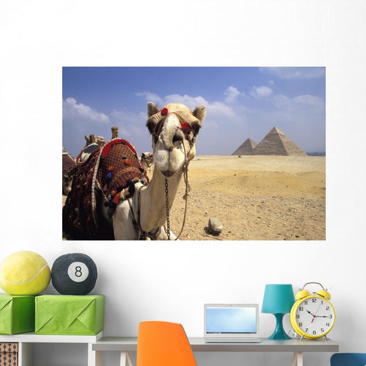 Close-Up On A Camel Looking At The Camera With Pyramids Wall Mural