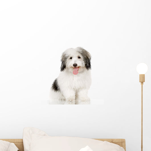 coton de tulear Wall Decal