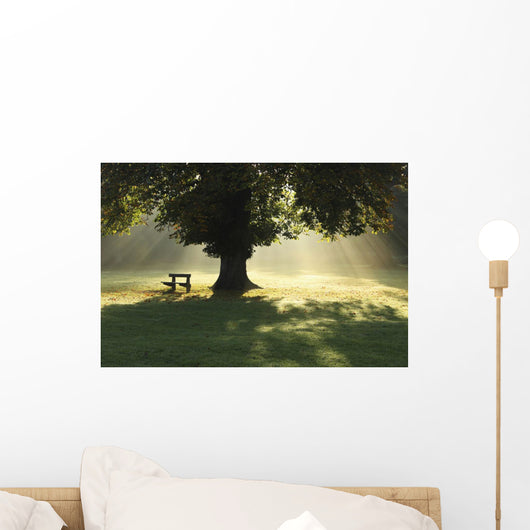 Lone Tree In Mist And Sunlight Wall Mural