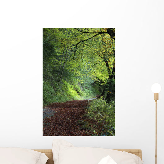 Path Through The Woods Wall Mural