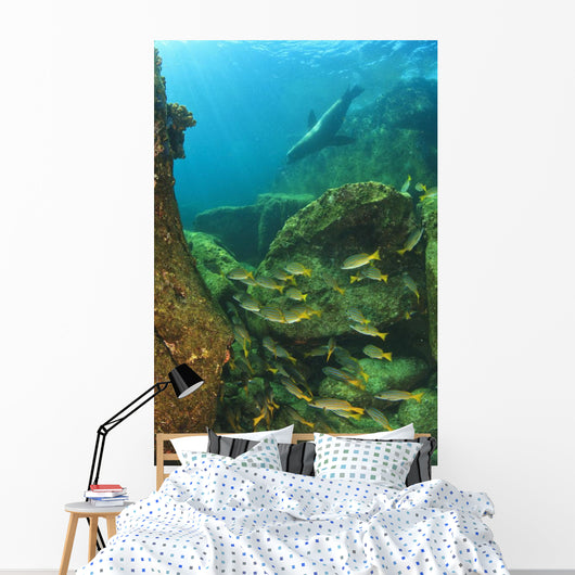 Fish And A Sea Lion Wall Mural