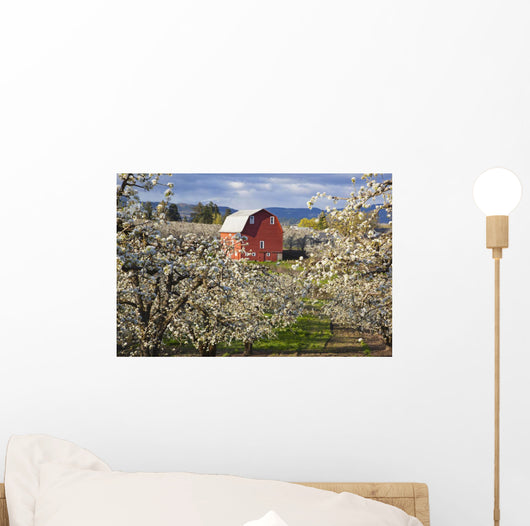 Apple Blossom Trees And A Red Barn Wall Mural