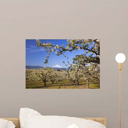 Apple Blossom Trees Wall Mural