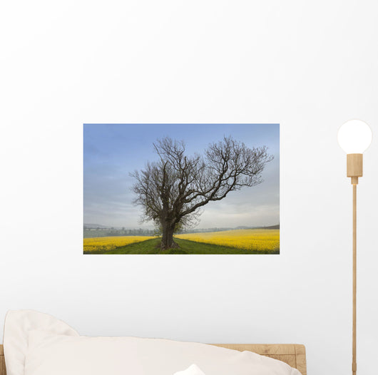 A Lone Tree On The Edge Of A Yellow Field Wall Mural