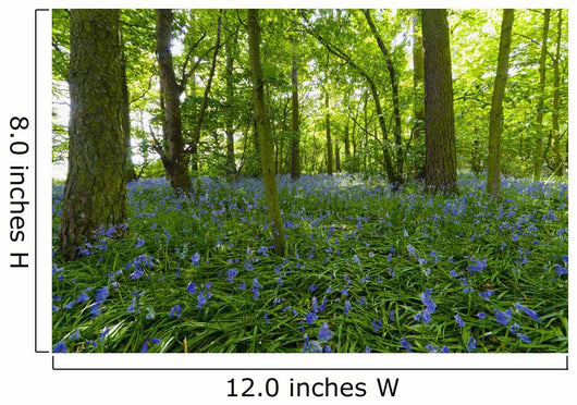 A Forest With Bluebells Wall Mural