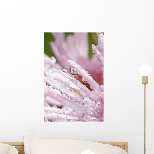 Flower Petals With Raindrops Wall Mural
