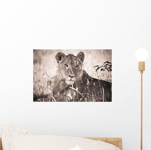 A Lioness Lays In The Shade Wall Mural