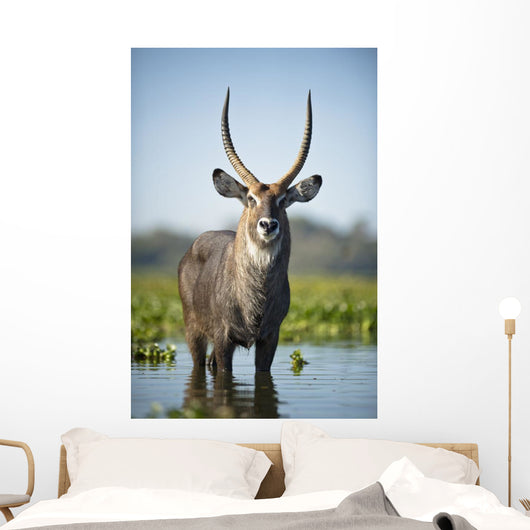 An Antelope Standing In Shallow Water Wall Mural