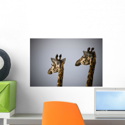 Two Giraffe Heads Side By Side Wall Mural