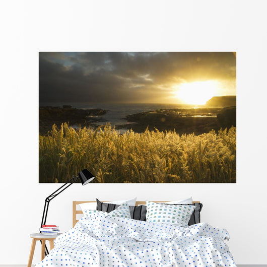 Sunlight Glowing At Sunset And Illuminating The Tall Grass Wall Mural