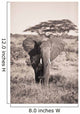 An Elephant Carrying Long Grass In It's Mouth Wall Mural