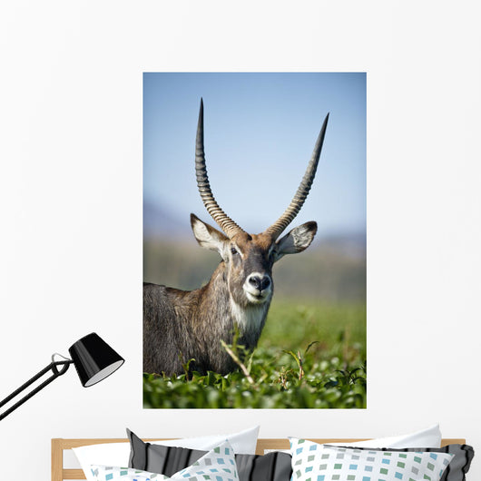 An Antelope Standing Amongst Tall Plants Wall Mural