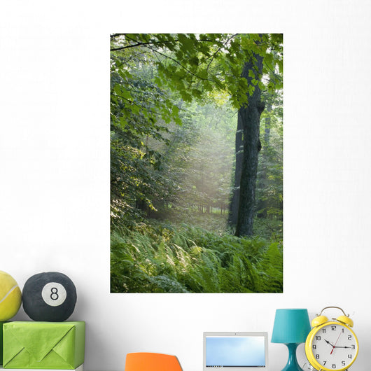 Trees In The Woods In The Early Morning Fog Wall Mural