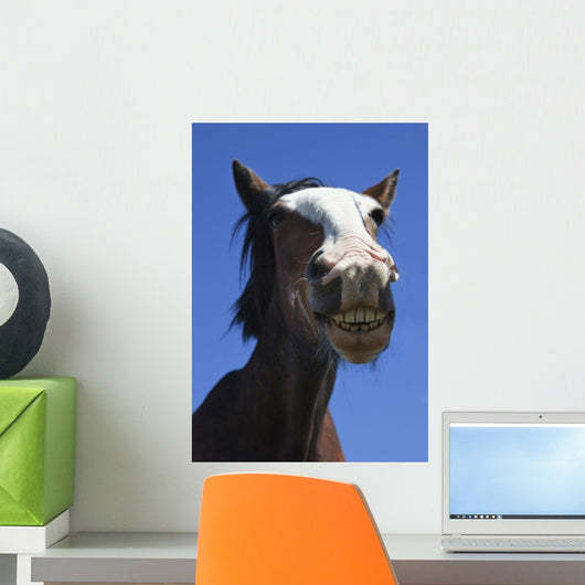 A Horse Smiling And Showing It's Teeth Wall Mural
