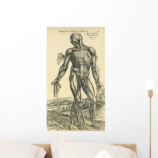 Front Of Male Human Body Anatomical Study Originally Published Wall Mural