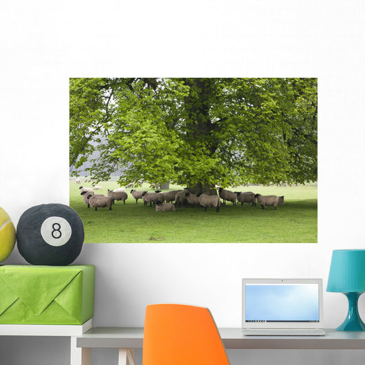 Sheep Standing Under A Tree Wall Mural